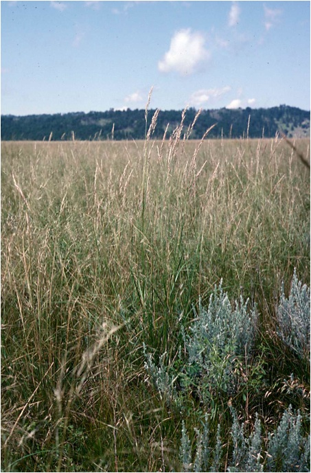 Field picture