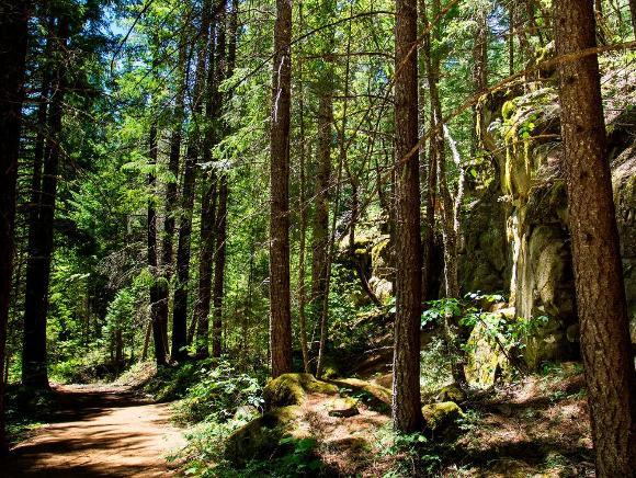 Oregon forest - Public domain