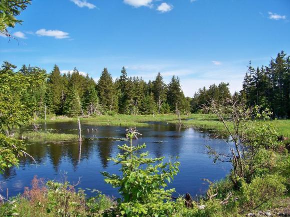 Moosehorn National Wildlife Refuge - Credit: USFWS