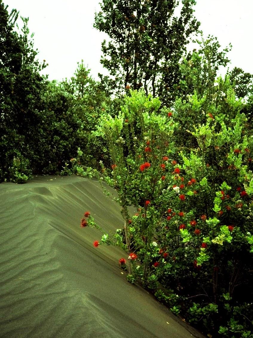 Ash dunes in Kau Desert - Credit: Jim Jacobi, USGS