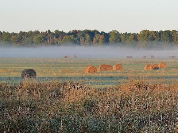 Grassland, Missiquoi National Wildlife Refuge, Vermont - Credit: FWS