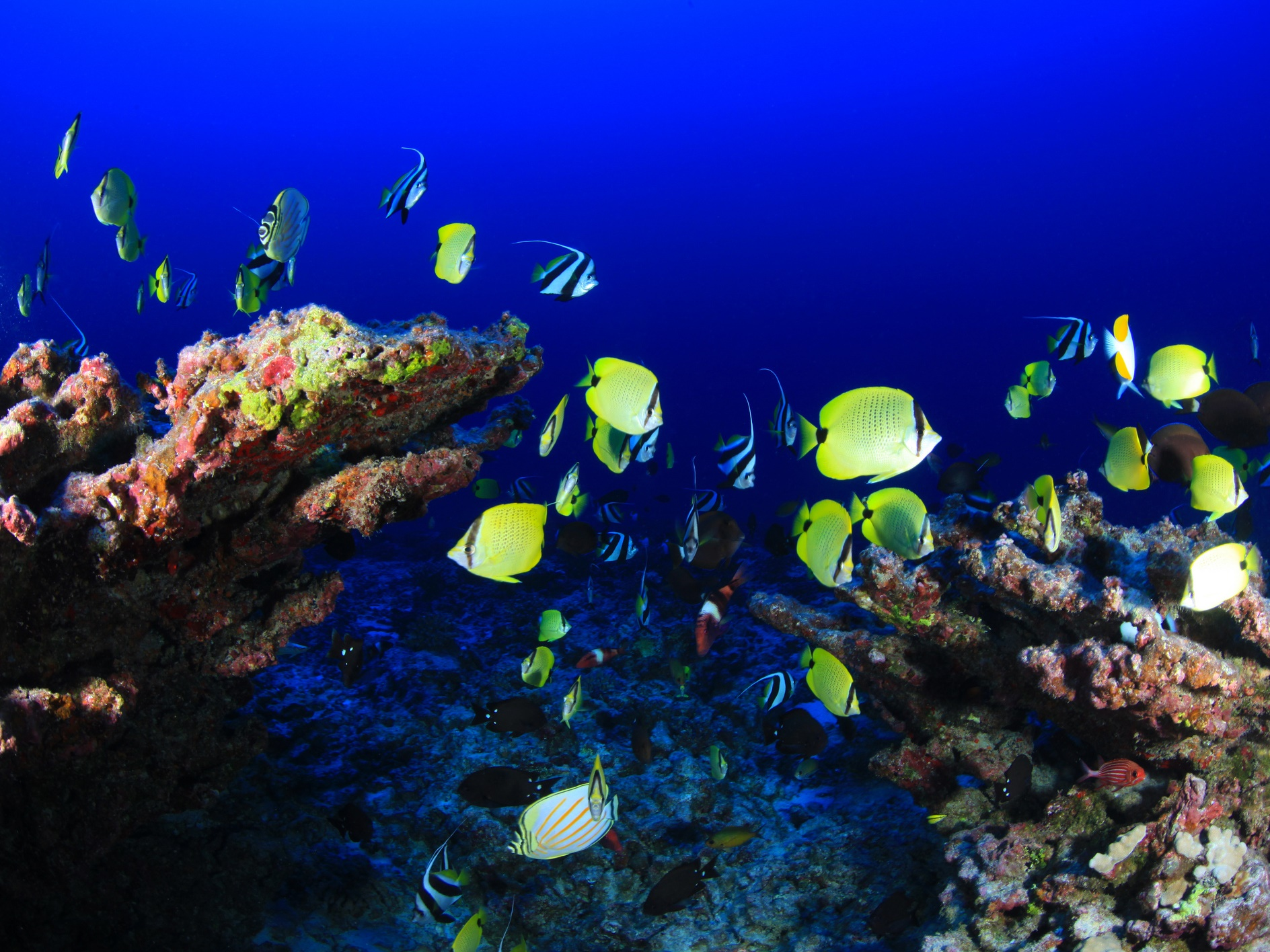Coral, NW Hawaiian Islands; Credit: NOAA