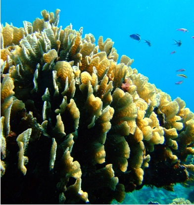 Picture of coral reefs