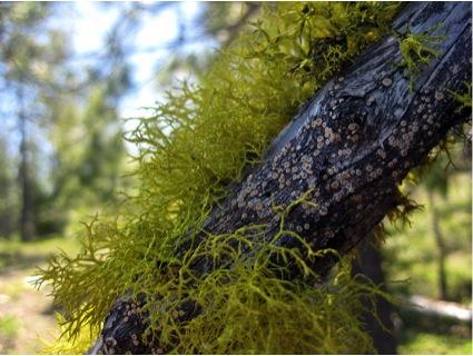 Lichen photo