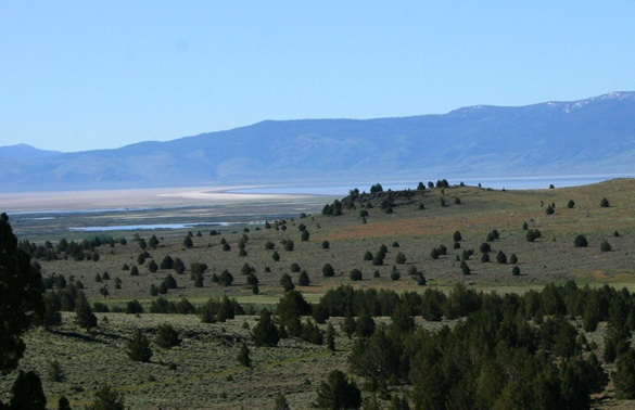 View of the plains with some trees