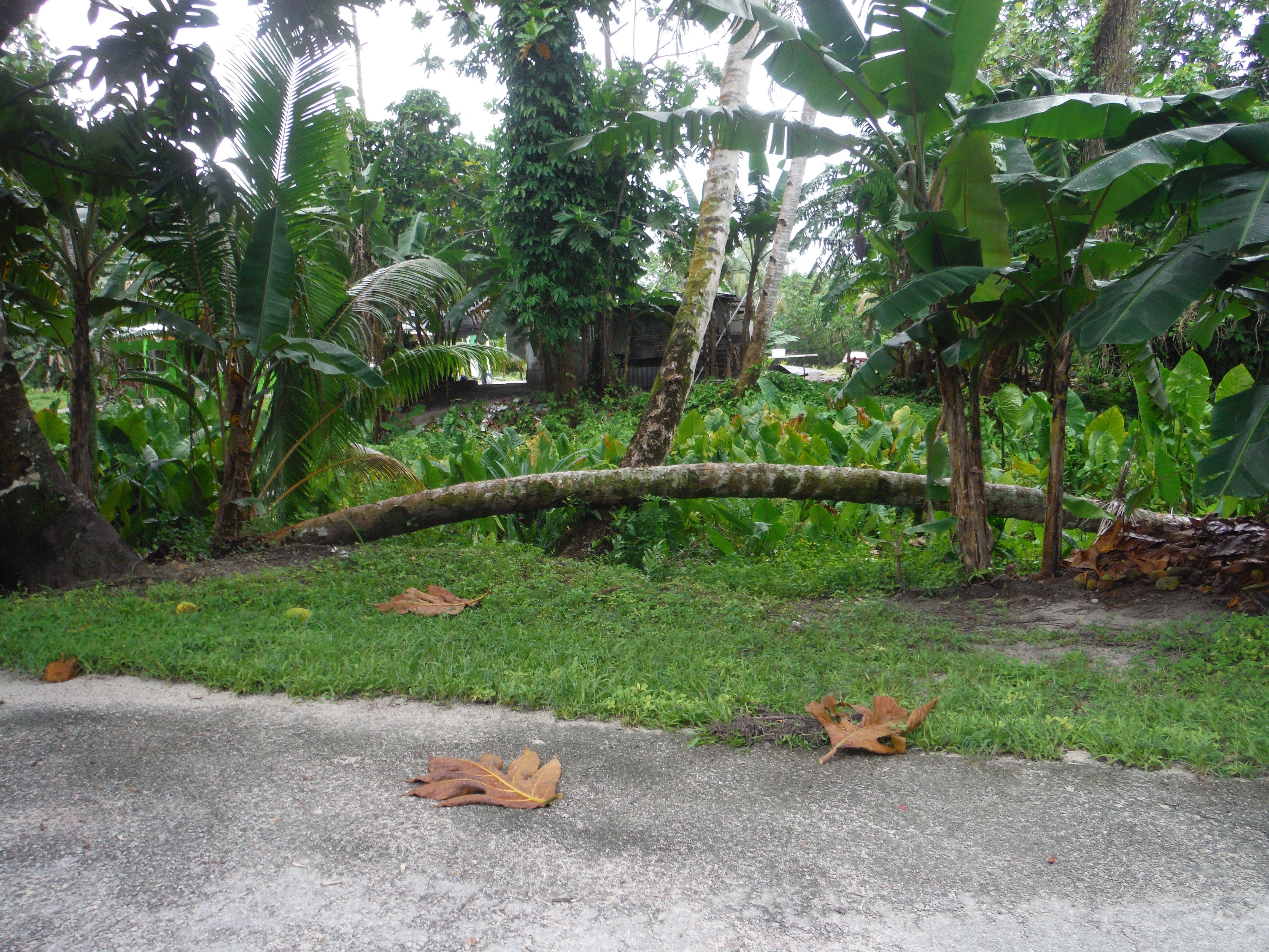 The Marshall Islands - Credit: Sarah Nash