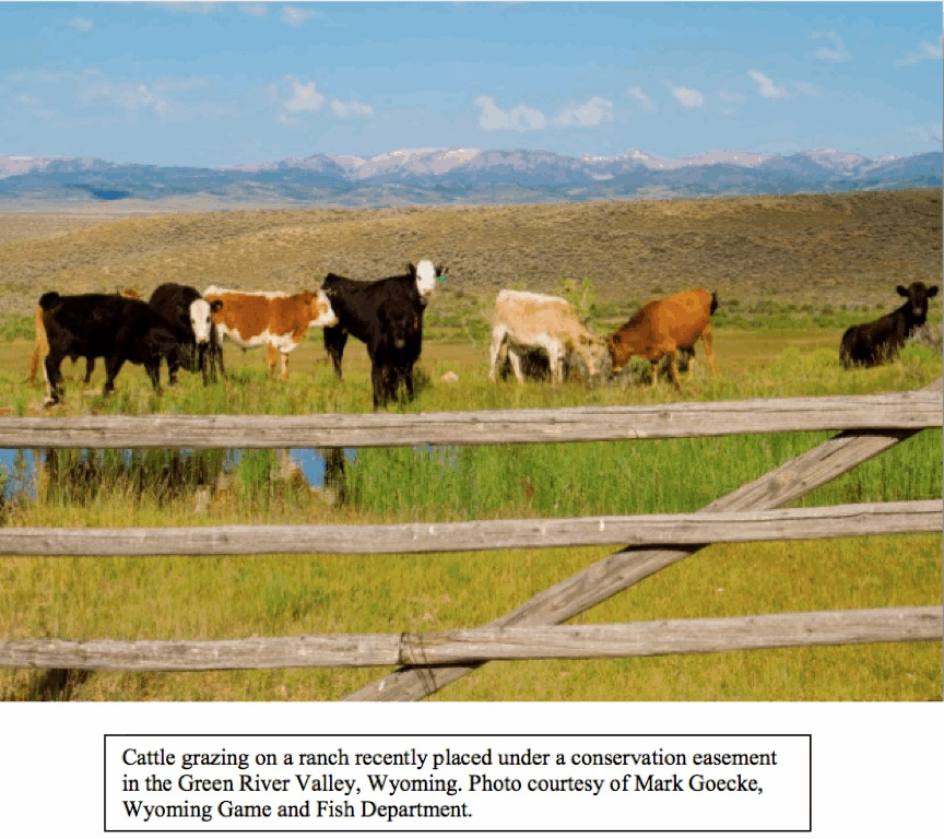 Title: Ranch.jpg
