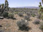 CaDesert.jpg from ScienceBase Item