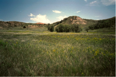 Leafy spurge study site at Theodore Roosevelt National Park