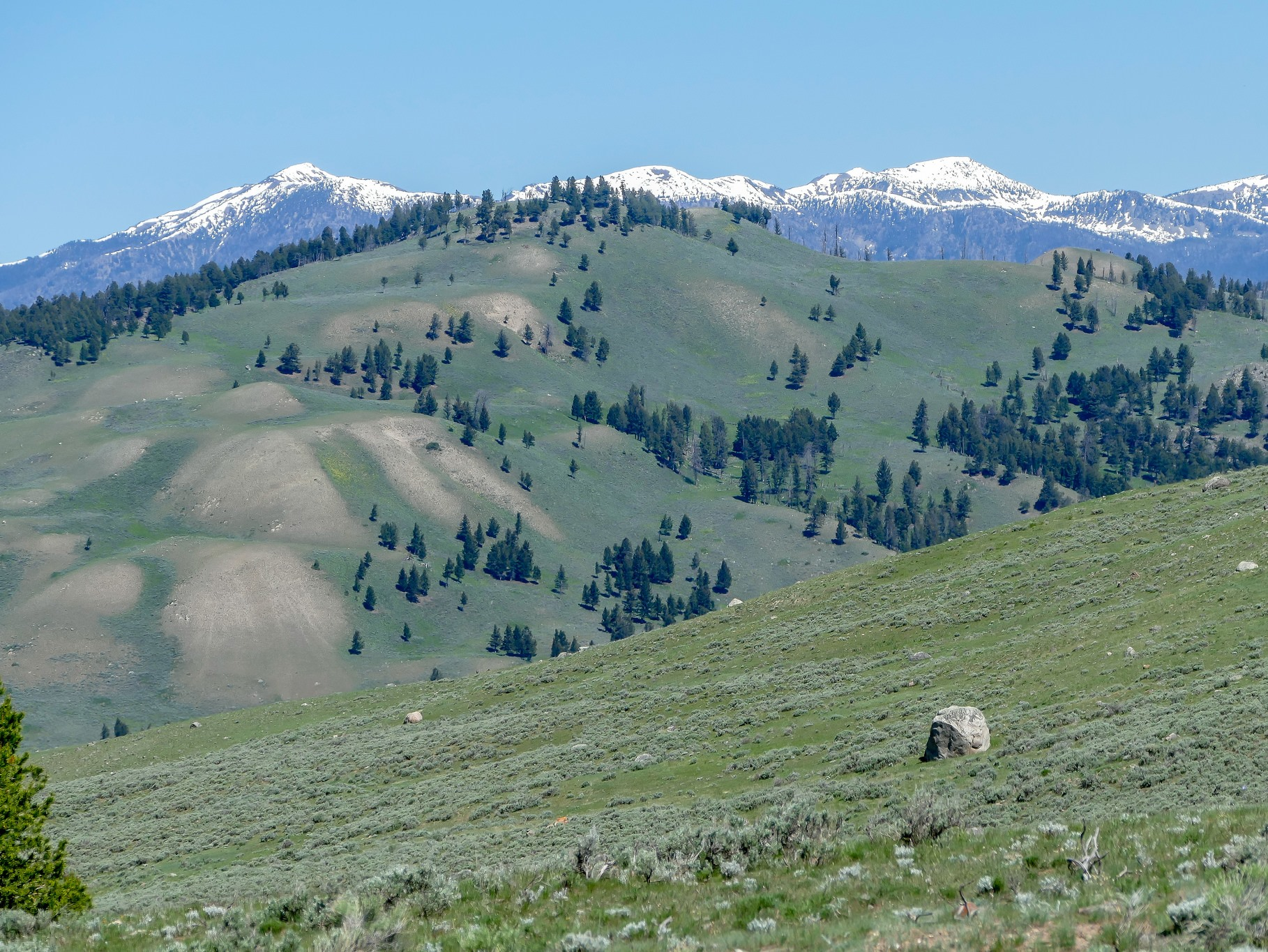 Absaroka Range, on the Montana - Wyoming border - Credit: Diane Renkin, NPS