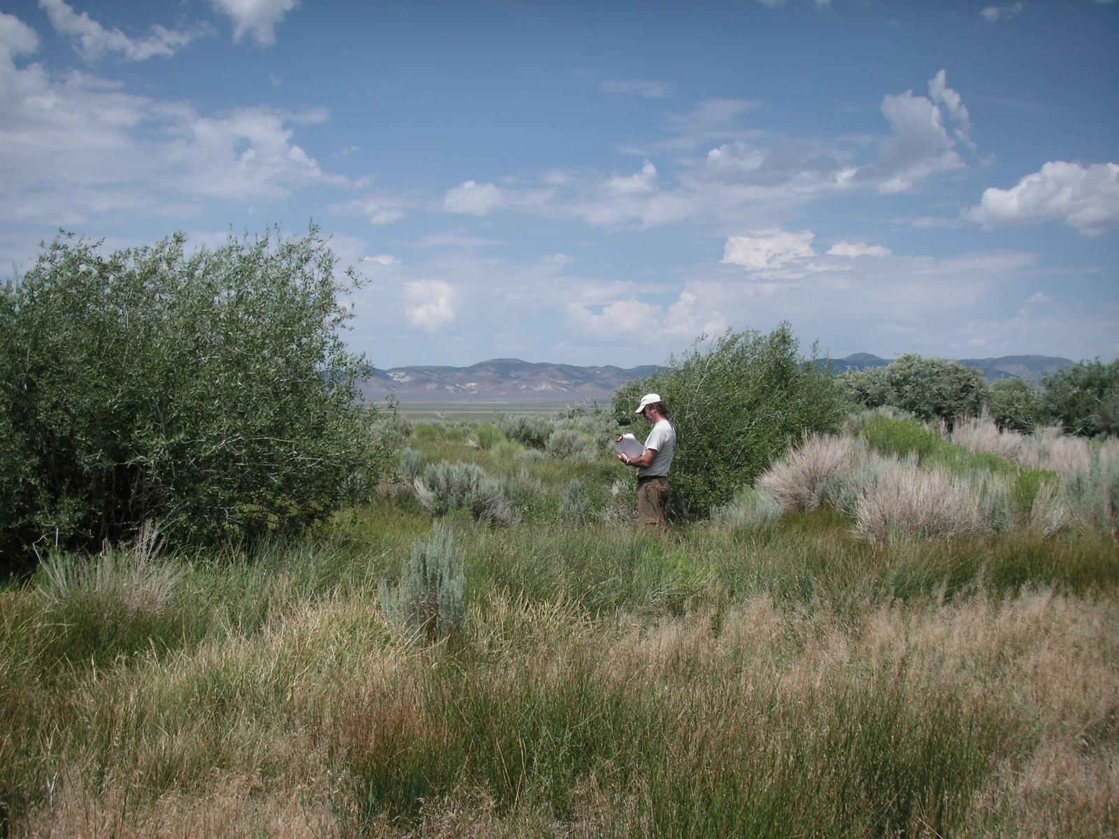Monitor Range, Nye County, Nevada - Credit: Erica Fleishman