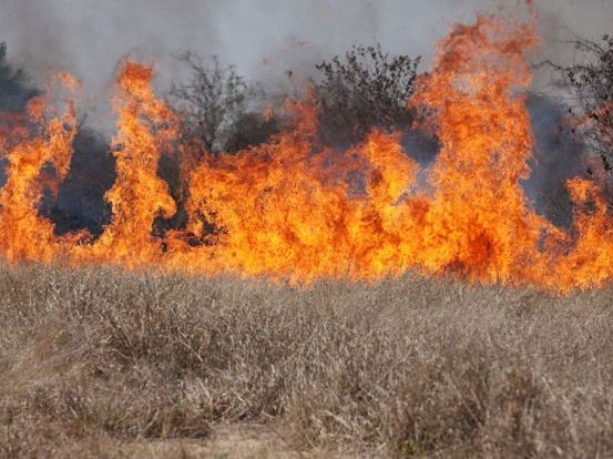 Wildfire fueled by cheatgrass - Credit: USDA/NRCS