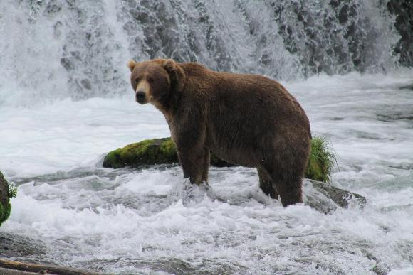 BTK bear