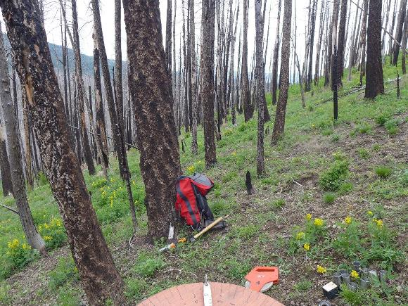 Site LC922, high burn severity