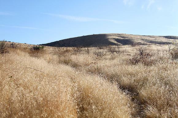 Invasive Cheatgrass_FWS