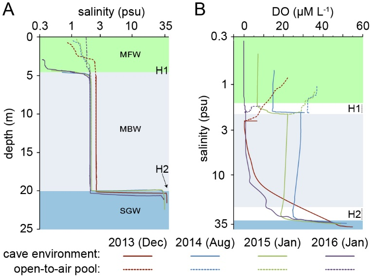 Physicochemical profiles from the density-stratified groundwater. Panel A are salinity-depth profiles and panel B are dissolved oxygen-salinity profiles.