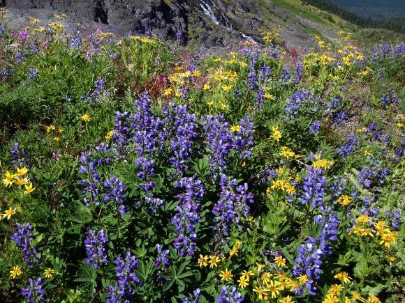 Wildflower meadow, WA - Credit: Alan Cressler