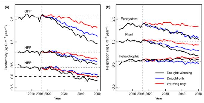 Model predicted productivity and respiration fluxes. (a) GPP, NPP, and NEP under