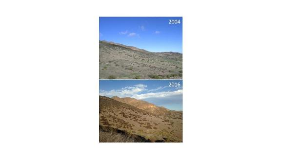 Photographs taken from a similar spot in 2004 and 2016 on Santa Cruz Island, CA.