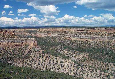 Pinyon juniper woodlands in Mesa Verde National Park - Credit: NPS