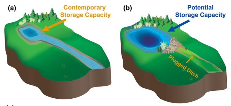 Conceptual diagram of a (a) drained and (b) restored depressional basin.