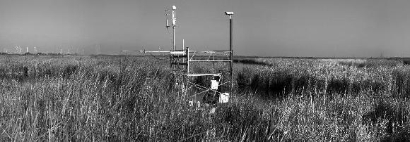 Wetlandflux - Mayberry