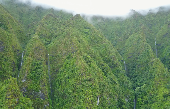 High elevation rainforest in Hawaii (Photo: L. Fortini).