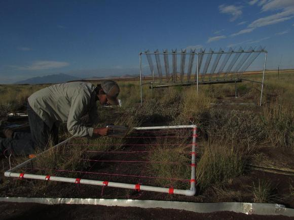 networked drought experiment